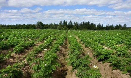 127 mil productores agrarios continúan trabajando la tierra en La Libertad